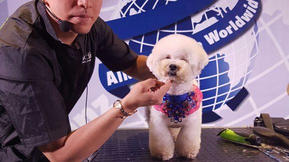 Gran éxito y magníficos profesionales  en el VIII congreso internacional Alianz de peluquería y estética canina 2017