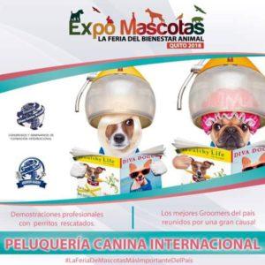 """Los mejores Peluqueros Caninos Profesionales """"Groomers"""" de Alianz Ecuador en ExpoMascotas 2018, la Feria del Bienestar Animal de Quito"""