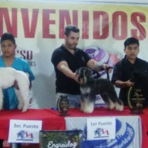 1er Congreso y Competencia de Groomers Alianz Perú 2018