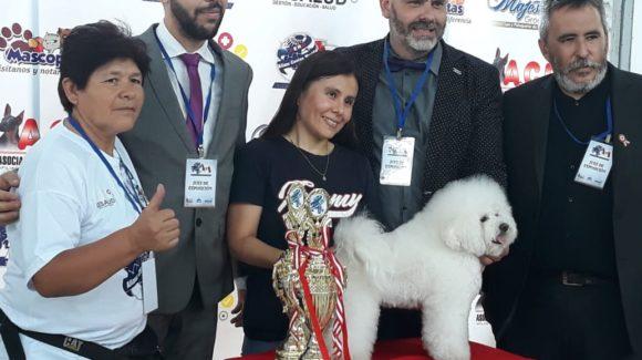 """1ra Exposición Canina Alianz """"Ciudad de los Reyes"""" en Lima-Perú 2019"""