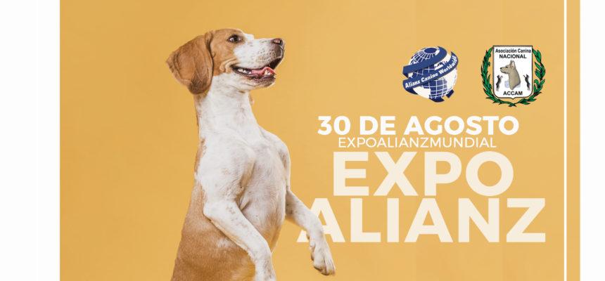 Selección de Expo Alianz
