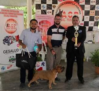Gran éxito en 1ra Exposición-concurso canino ACP en la ciudad de Tarapoto en Perú