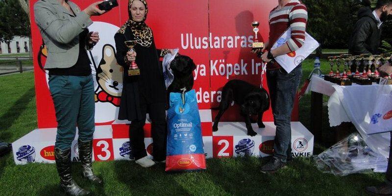 ALIANZ TURKEY CANE CORSO 2016