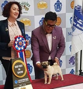 International Dog Show KKC/UAKC/ACW – April 2017