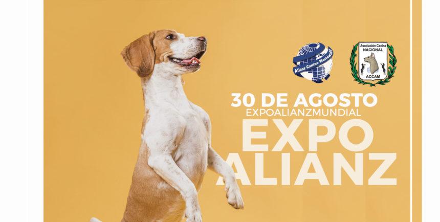 Envío de Videos para «ExpoAlianz»